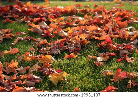 Colorful Autumn Leaves in the Midwest