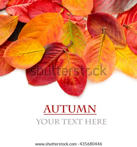 colorful autumn leaves on a white background for text #435680446