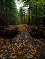 Colorful autumn leaves on a wooden walkway across a ditch in the forest
