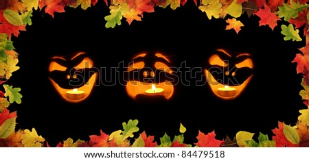 colorful autumn leaves on black