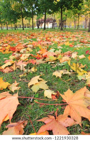 Colorful Autumn Leaves on Green Grass Background at City Park. Outdoor Park Nature Scene of Fall Landscape with Green, Yellow, Red and Orange Colored Fallen Autumn Maple Leaves Laying on the Ground #1221930328