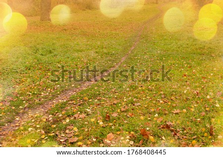 Colorful autumn leaves on the green grass in a sunny day. Botanical floral autumn backdrop. Autumn thanksgiving day backdrop. Autumn leafs