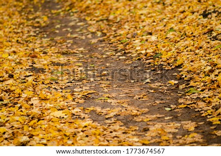 Colorful autumn leaves on the green grass in a sunny day. Botanical floral autumn backdrop. Autumn, fall, thanksgiving day backdrop. Autumn leafs