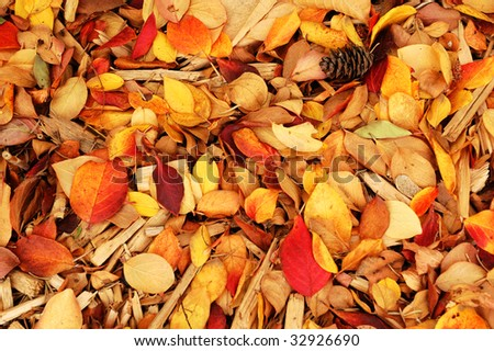 Colorful autumn leaves on the ground in the north saskatchewan river valley, edmonton, alberta, canada