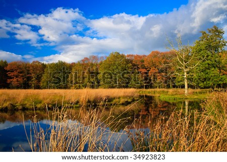 Colorful autumn leaves on trees in the wetlands