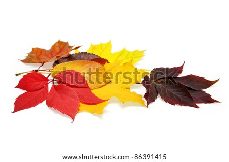 colorful autumn leaves over white background with clipping path