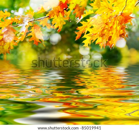 colorful autumn leaves reflecting in the water