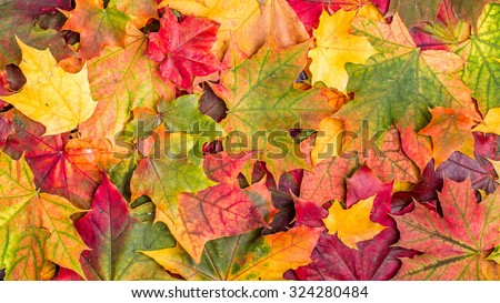 Colorful autumn leaves, top view.