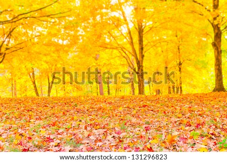 Colorful autumn leaves with forest blurred background. selective focus