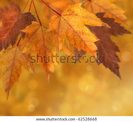 Colorful autumn  leaves with shallow focus background