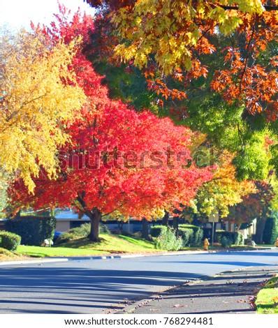 Colorful Autumn Maple in Oregon. - Shutterstock ID 768294481