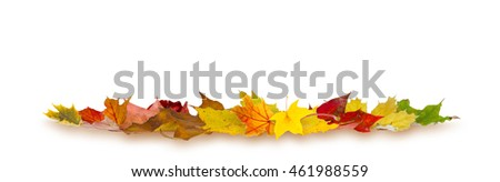 Colorful autumn maple leaves lying on white background. #461988559