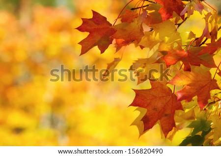 Autumn seasonal