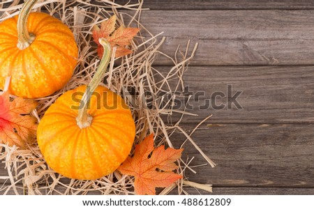 Colorful autumn pumpkins on wooden surface with copy space