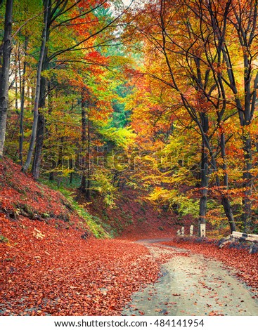 colorful autumn scene in the...