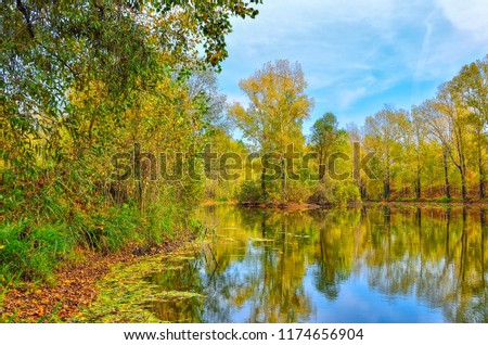 Colorful autumn sunny landscape on the lakeside with reflection of blue sky, clouds and trees on the water with ripple and golden leaves covered #1174656904
