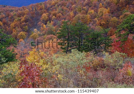 Colorful Autumn Tree Leaves, foliage fall color, Skyline Drive, Shenandoah National Park, Appalachian Mountains, Virginia