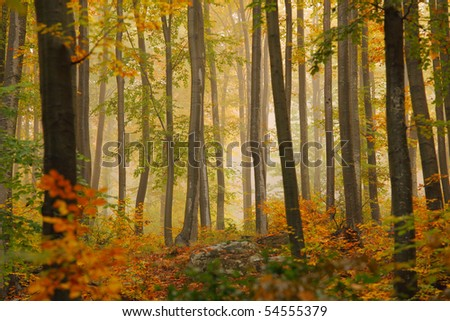 Colorful autumn trees in forest - Shutterstock ID 54555379