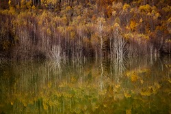colorful autumn trees reflecting in lake
