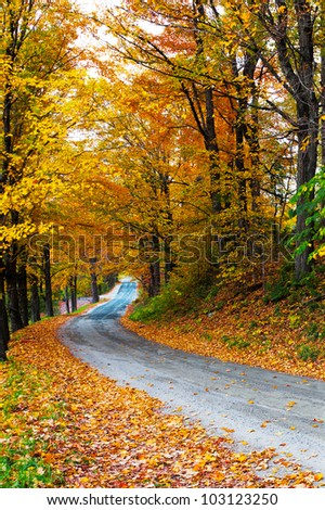 Colorful autumn trees with fallen leaves on a winding country road