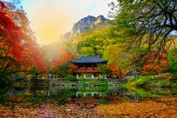Colorful autumn with beautiful leaf at Baekyangsa temple in Naejangsan national park, South Korea.