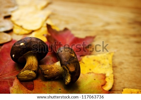 Colorful autumnal leaves lying on a wooden board