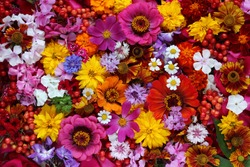 Colorful background from garden of flowers and berries, top view.