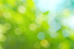 colorful background in green colors, the bokeh effect