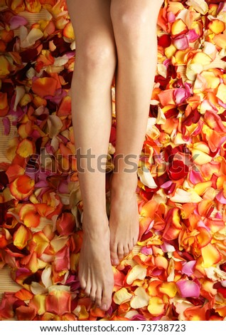 Colorful background made of beautiful female legs and petals