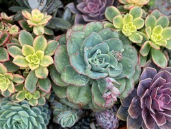 Colorful background of succulent plants