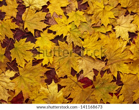 colorful background of yellow autumn leaves