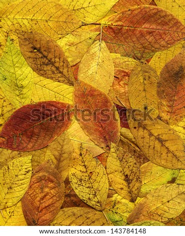 Colorful background of yellow autumn leaves. Big size.