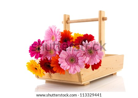 Colorful basket full with picked Gerber flowers