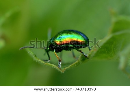 Colorful beatle on the leaf