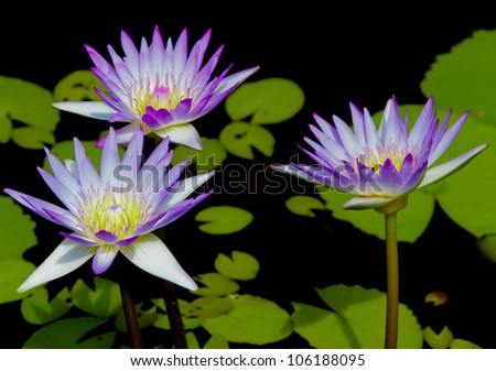 Colorful Beauty Isolated Flower