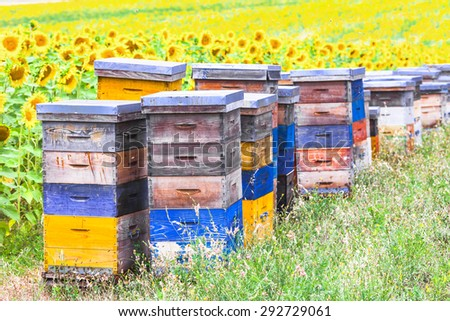 colorful beehives in sunflower\' field in Provance, France