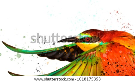 colorful bird and watercolor spray on white , love and bright colors