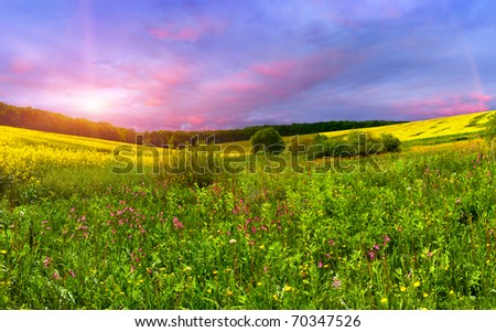 Colorful blossom field in the summer
