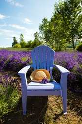 Colorful blue chair in a field of vibrant purple lavender.  In the chair is a summer floppy hat and a bouquet of fresh cut flowers.