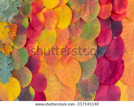Colorful bright autumn leaves background
