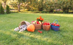 colorful bright vegetables in baskets stand on the grass