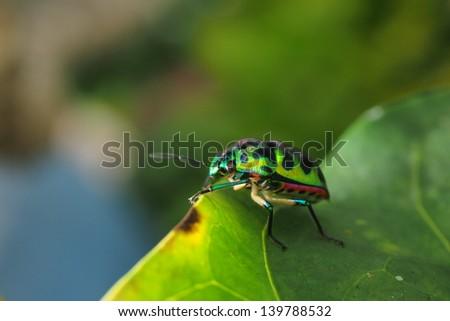 colorful bug #139788532