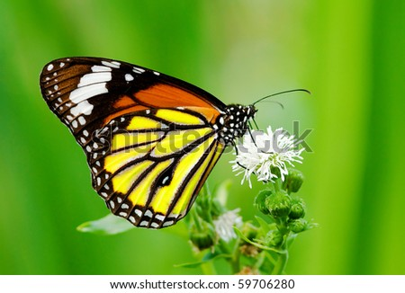 Colorful butterfly feeding on white flower