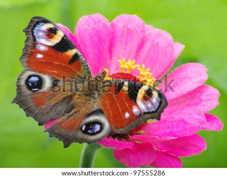 Colorful butterfly on a flower - stock photo