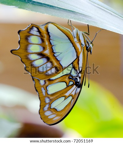 Colorful butterfly portrait...