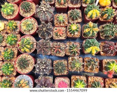colorful cactus in square pot