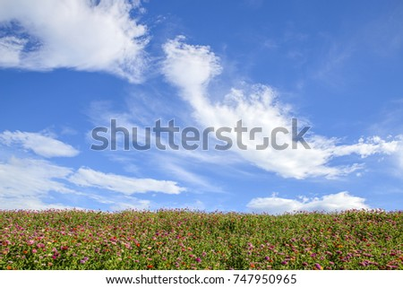 Colorful canola flower field landscape again cloudy sky  #747950965
