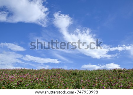 Colorful canola flower field landscape again cloudy sky  #747950998