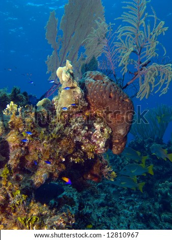 Colorful Cayman Brac Reef Scene with Blue Fish