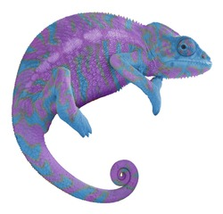 Colorful Chameleon Isolated